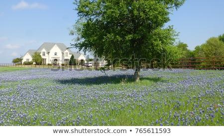 ülke · evler · Teksas · ağaçlar · ev · Bina - stok fotoğraf © lunamarina