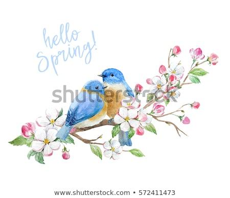 Two birds nature frame Stock photo © bluering