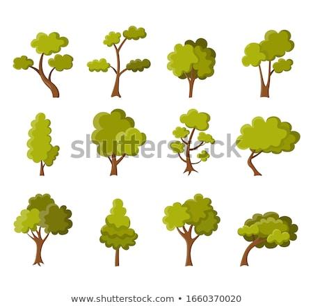 Szett fa különböző terv illusztráció absztrakt Stock fotó © colematt