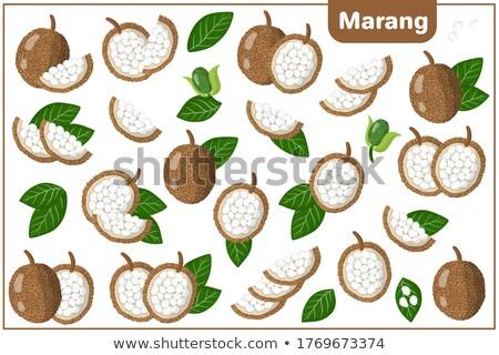 Exotique juteuse fruits vecteur isolé chêne Photo stock © robuart
