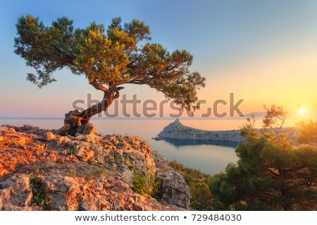 Amazing tree growing out of the rock at sunrise Stock photo © denbelitsky