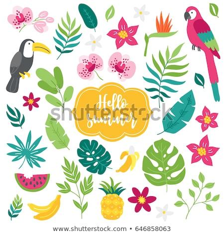Zestaw tropikalnych Rainforest ilustracja lasu charakter Zdjęcia stock © bluering