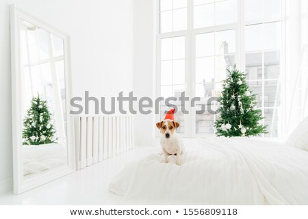 Shot of pedigree dog poses on comfortable bed in spacious bedroom with big windows, white mirror on  Stock photo © vkstudio