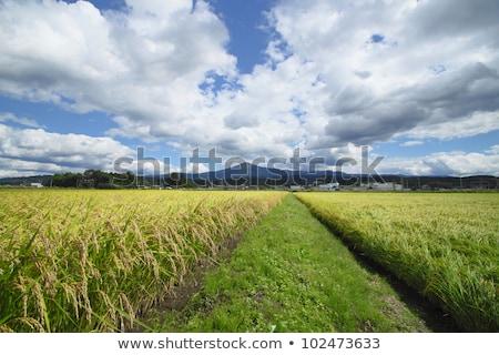 Mt.Himekami and Landscape of rice field Stock photo © yoshiyayo