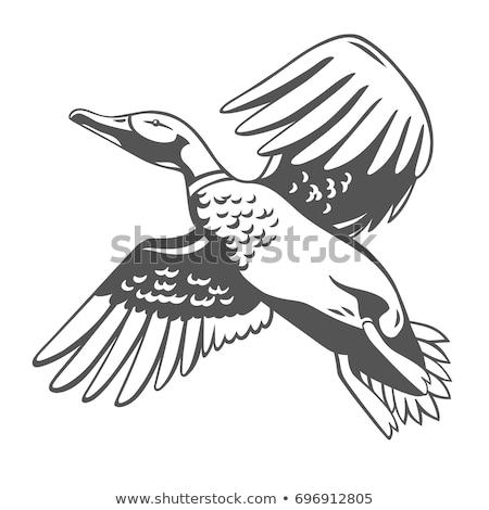 duck silhouettes set stock photo © kaludov
