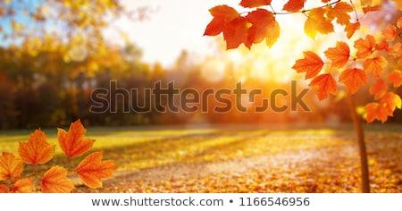 Kolorowy pomarańczowy spadek sezonie pozostawia niebo drzewo Zdjęcia stock © latent