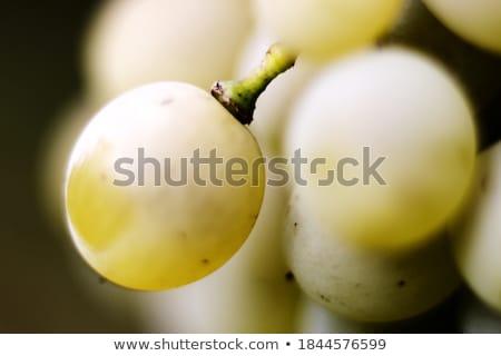 белый · виноград · подвесной · виноградник · вино - Сток-фото © Hofmeester