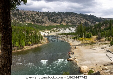Thermal River of grass in Yellowstone Stock photo © emattil