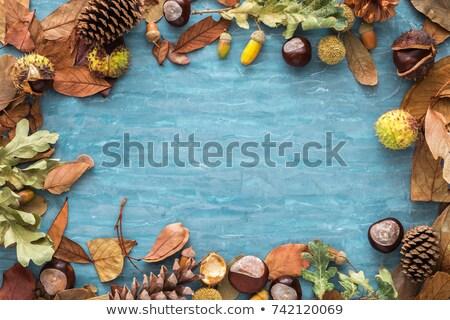 Kubek kawy sosny stożek drewna tle Zdjęcia stock © Massonforstock