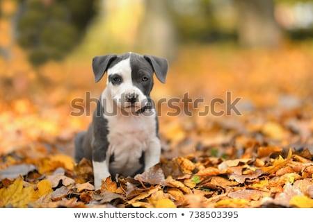 ストックフォト: かわいい · 子犬 · 画像 · 1 · 月 · 古い