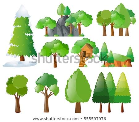 különböző · hegyek · fák · illusztráció · fa · természet - stock fotó © bluering