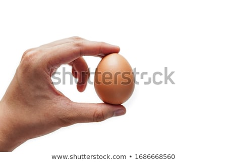 hand holding an eggshell Stock photo © devon