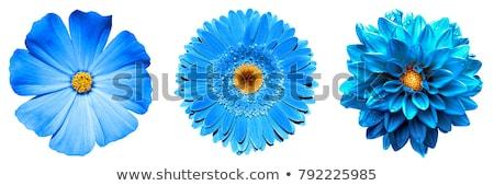azul · vermelho · flores · primavera · natureza - foto stock © artush
