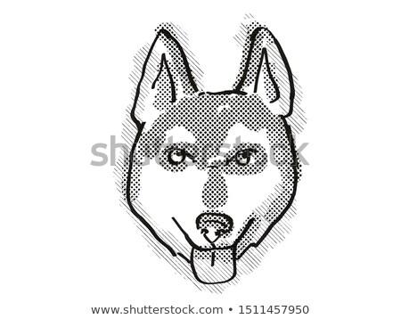 Alaszkai kutyafajta rajz retro rajz stílus Stock fotó © patrimonio
