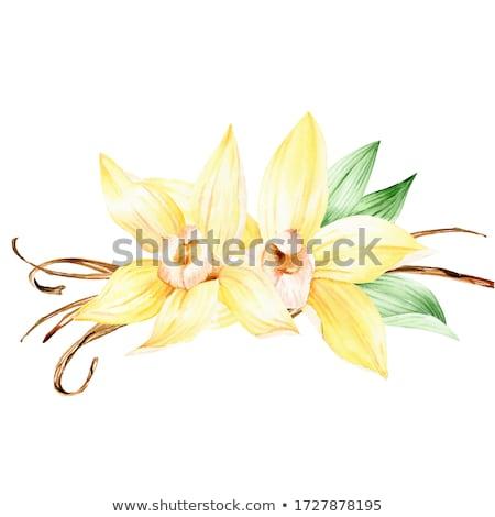 Orchidée fleur jaune fleurir augmenté maison Photo stock © Melnyk