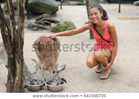 Kangaroos at zoo woman tourist petting kangaroo while feeding in wildlife nature reserve. Happy asia Stock photo © Maridav