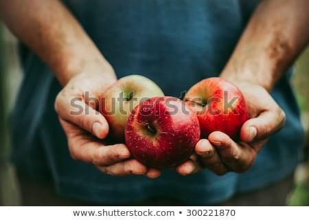 красное · яблоко · рук · изолированный · белый · продовольствие · яблоко - Сток-фото © zastavkin