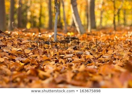 Close-up of a beautiful autumn leaf on the ground covered of mos Stock photo © iko