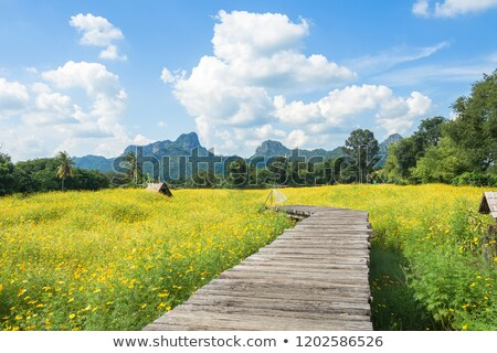 the bridge in the field stock photo © aetb