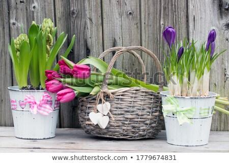 spring background crocuses wooden panel stock photo © fotoaloja