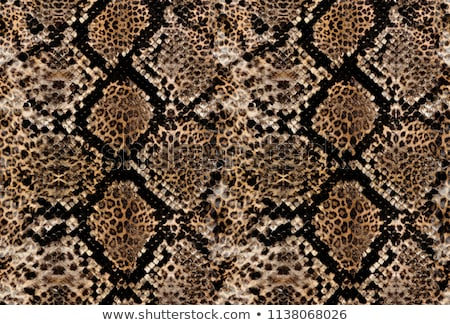 leopard or jaguar skin pattern background  Stock photo © FrameAngel