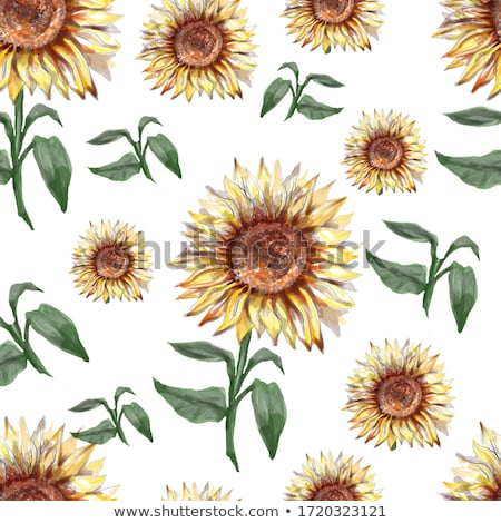 seamless pattern with sunflower and seeds stock photo © elenapro