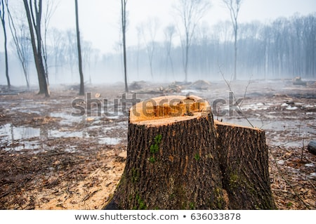 Firewood pile in a deciduous forest Stock photo © olandsfokus