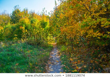 Walkway among colorful autumn leaves in the park Stock photo © Cipariss