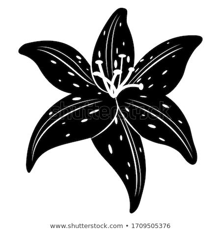 Сток-фото: цветок · тигр · Лилия · аннотация · фон · синий