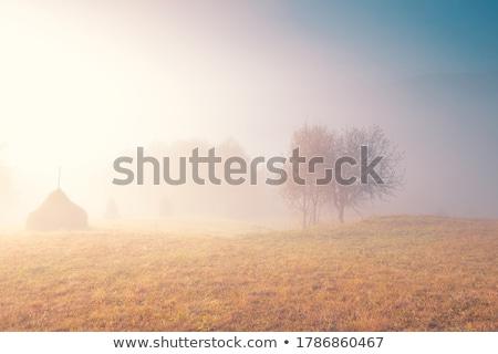 Stockfoto: Mist · najaar · landschap · hooiberg · mist · landbouw