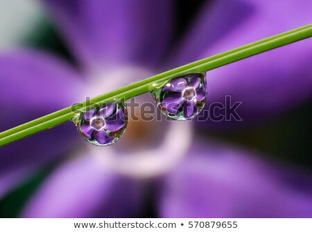 Flower refraction in a dew drop on a twig Stock photo © manfredxy