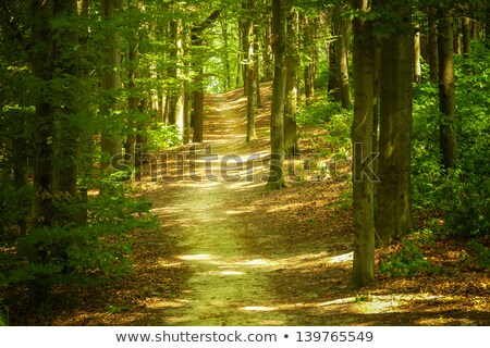 Hiking parh in the old forest. stock photo © Steffus