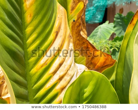 A yard with plants Stock photo © bluering
