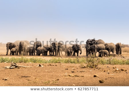 water in safari in kruger national park south africa Stock photo © compuinfoto