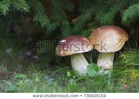 Stock photo: Big mushroom under the tree