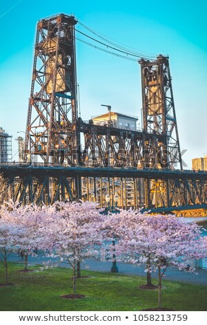Cherry Blossoms Trees in Portland Old Town Stock photo © davidgn