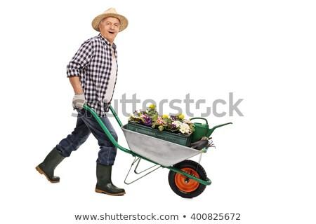 Senior Adult man in garden smiling Stock photo © IS2