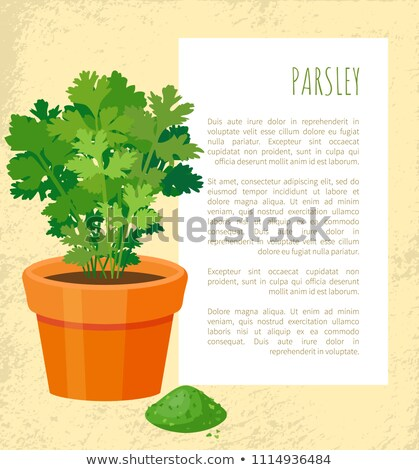 Parsley Poster and Text Sample Vector Illustration Stock photo © robuart