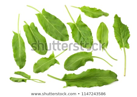 Leaves of Sorrel Rumex acetosa, paths Stock photo © maxsol7