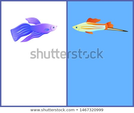 Betta Fish and Swordtail Fish Icons Double Color Stock photo © robuart