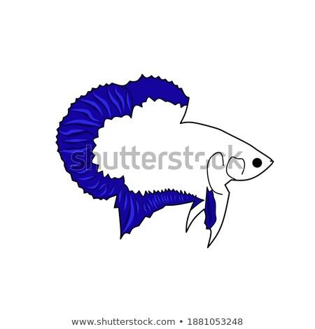 Colorful Fish Type Closeup Vector Illustration Stock photo © robuart