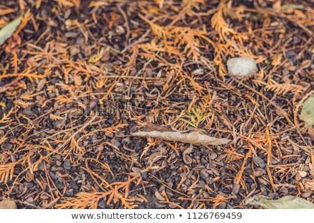 Naalden Geel najaar bos boom zon Stockfoto © galitskaya