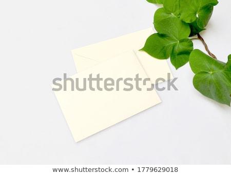 Kopercie zielone liście charakter papieru karty korespondencja Zdjęcia stock © Anneleven