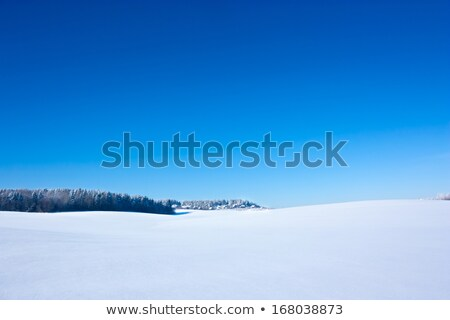 snow field and blue sky stock photo © yoshiyayo