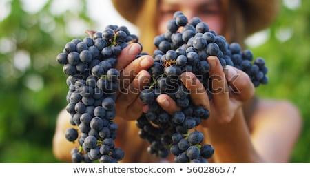 Verde uva mão mulher isolado branco Foto stock © boroda
