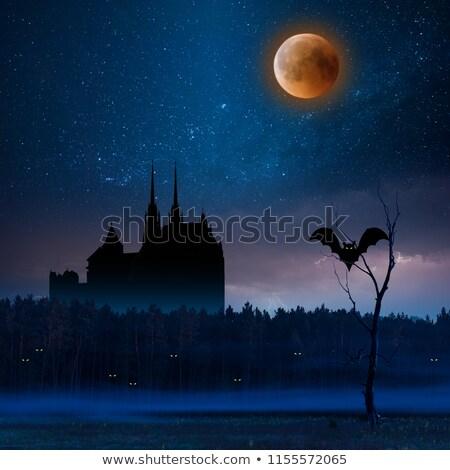 halloween · ilerleyin · uzay · örnek · mesaj · kediler - stok fotoğraf © annavolkova