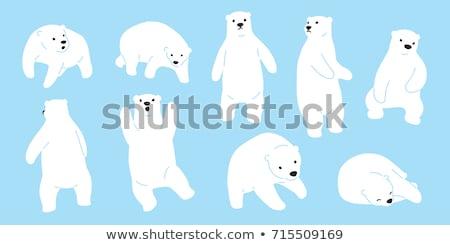 Teddy urso polar isolado branco brinquedo preto Foto stock © samsem