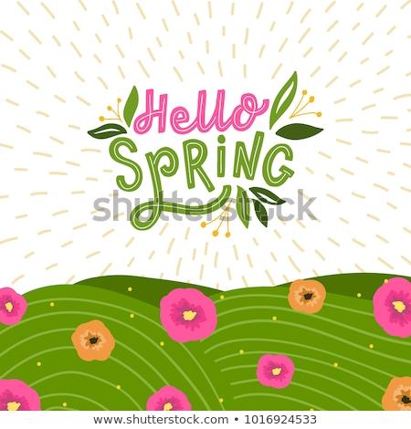 Fresh spring grass Stock photo © hraska