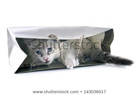 котенка играет белый глазах кошки ПЭТ Сток-фото © cynoclub