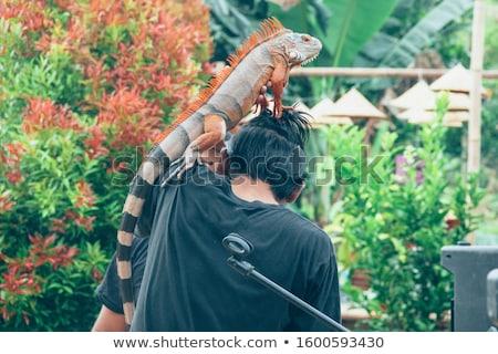 Retrato moço iguana homem sol jovem Foto stock © Jasminko